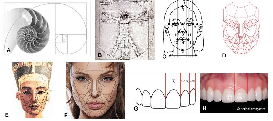 Les proportions idéales du visage, des dents et du sourire servent de guide en orthodontie.